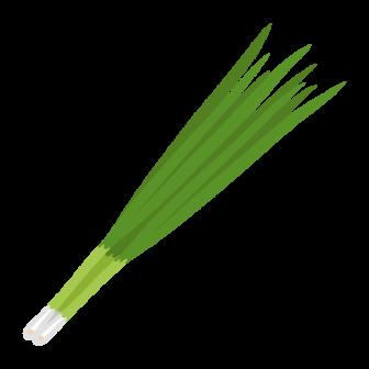 青ねぎ 葉ねぎの無料ベクターイラスト素材